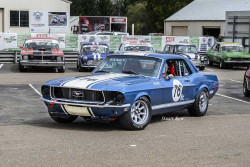 lores-Blue-1968-Mustang